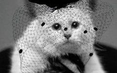 Gata de Karl Lagerfeld 'de luto' após morte do estilista